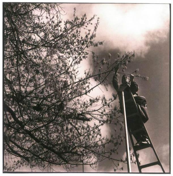 Récolteur de pollen © Nancy Rica Schiff. Tous les droits réservés.