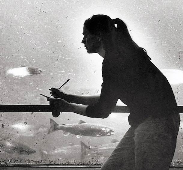 Compteur de poisson © Nancy Rica Schiff. Tous les droits réservés.