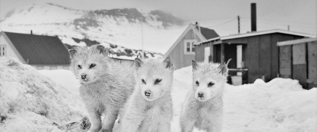 © Ragnar Axelsson. Tous les droits réservés.