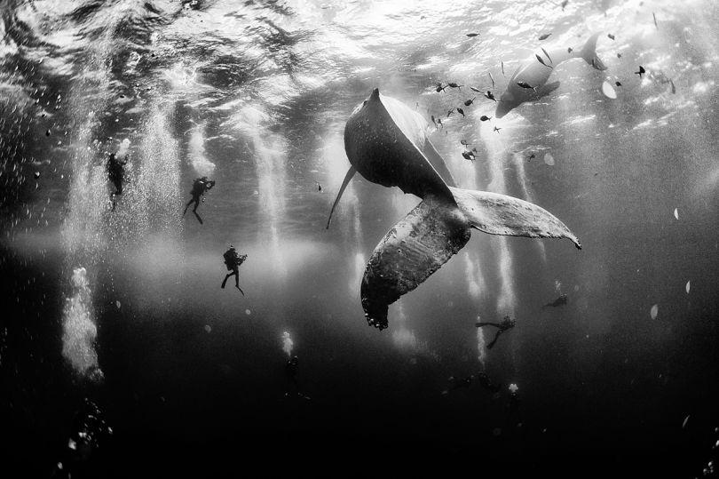 1er prix. Whale Whisperers © Anuar Patjane. Tous les droits réservés.