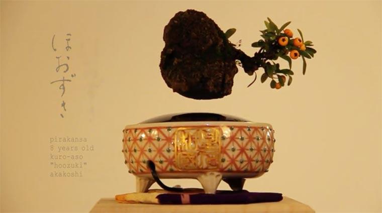 Quand des bonsa en l vitation d fient la gravit for Plante en levitation