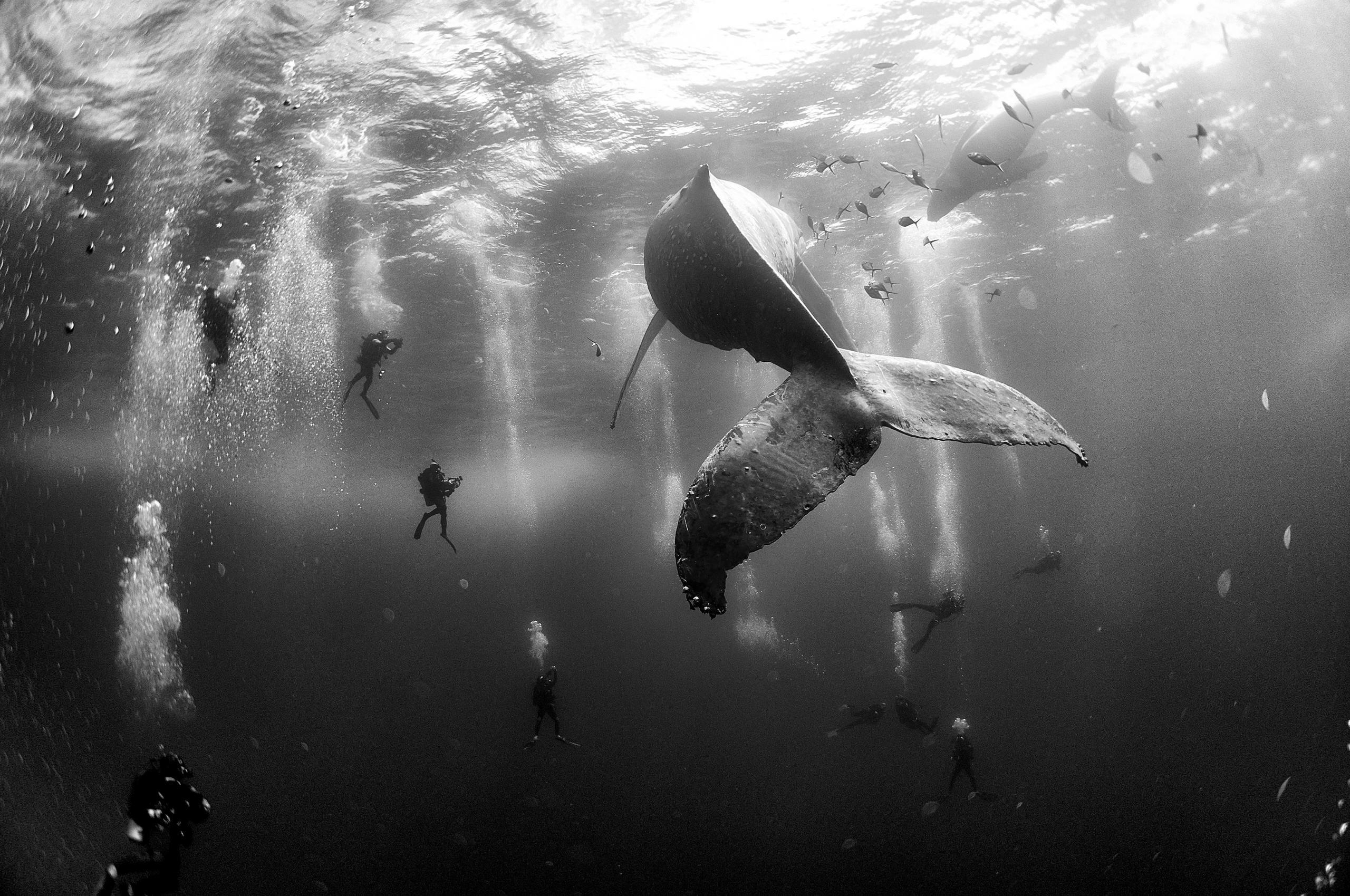 """Deuxième prix, catégorie """"Nature"""" © Anuar Patjane Floriuk"""