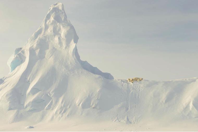 """Prix d'honneur, catégorie """"nature"""" © Ohn RollinsCet endroit se situe au niveau du détroit de Davis, au large de l'île de Baffin dans l'Arctique canadien. Une maman ours blanc et son bébé sont perchés au sommet d'un iceberg couvert de neige."""
