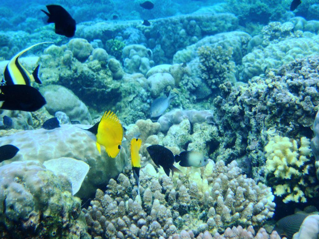 Parc national marin de Sanganeb et Parc national marin de la baie de Dungonab (Soudan)