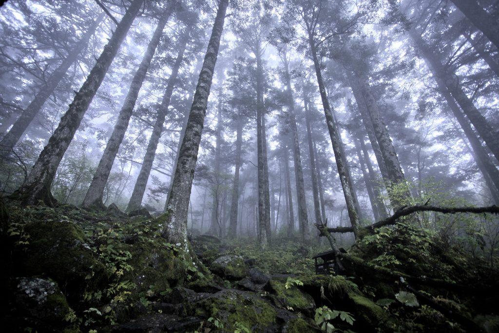 Shennongjia_virgin_forest