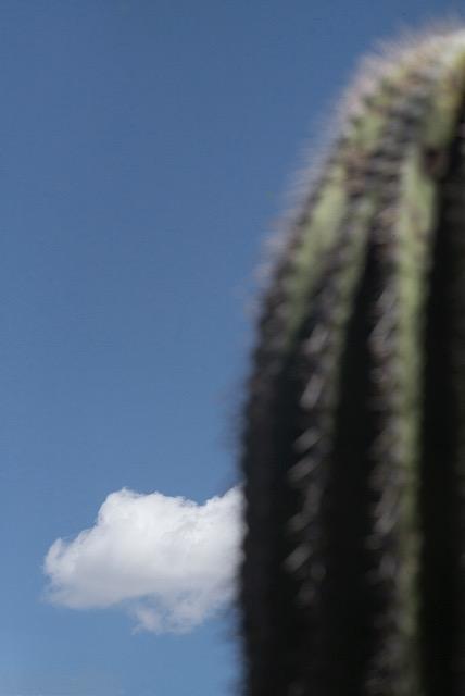 © Ralph Gibson, Vertical Horizon, Cactus Cloud