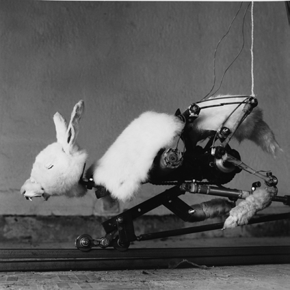 © Gilbert Peyre, Un lapin blanc, 1998-2000