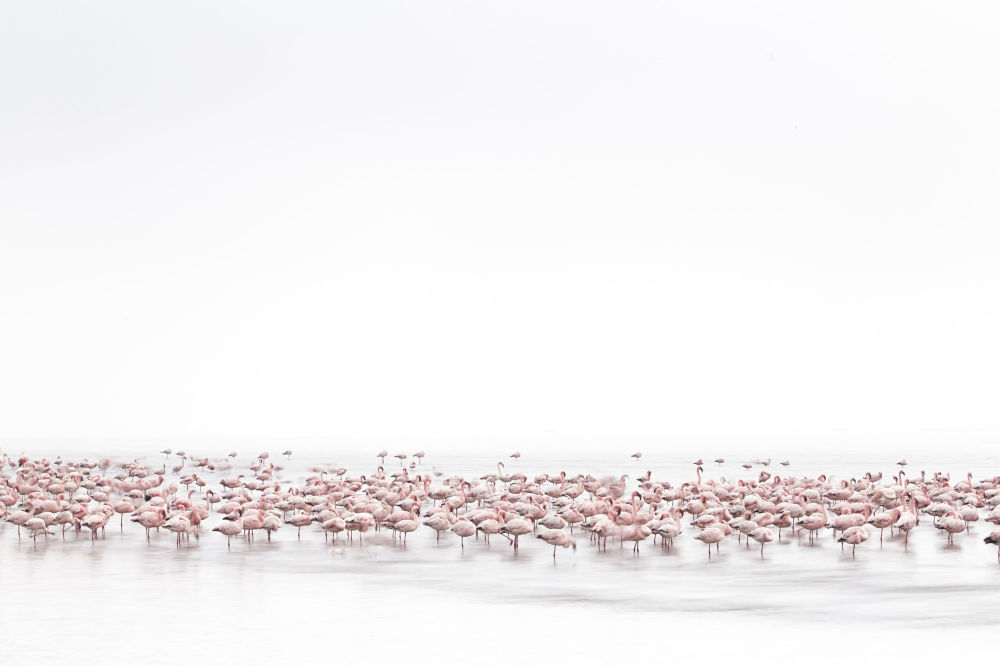 Alessandra Meniconzi // Switzerland dans la catégorie Vie Sauvage. © PHOTO. ALESSANDRA MENICONZI/2017 SONY WORLD PHOTOGRAPHY AWARDS