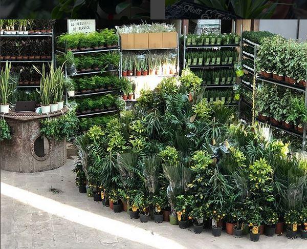 vente plante tropicale